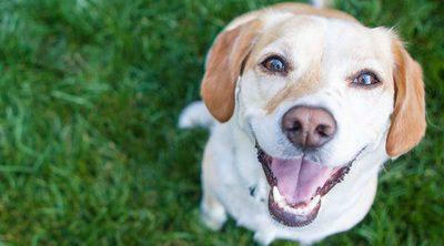 ¿Cómo evitar que te roben a tu perro en el parque?