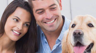 Cuando los animales son una propiedad: ¿qué pasa si me divorcio?