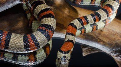 ¿Puedo juntar diferentes reptiles en el mismo terrario?