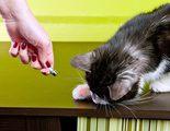 Gadgets para mascotas, �sab�as que exist�an tantas cosas?