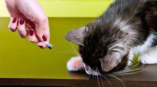Gadgets para mascotas, ¿sabías que existían tantas cosas?