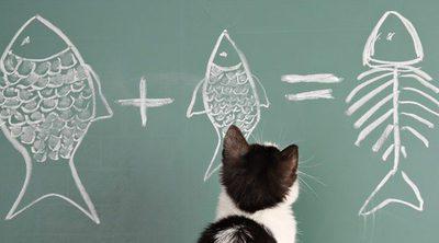 ¿Cómo adiestrar a un gato?