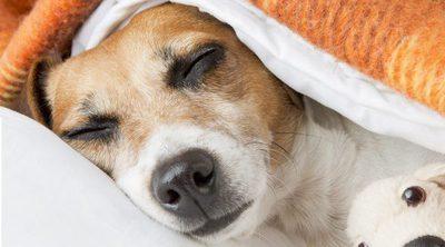¿Sabías que los perros también sueñan?
