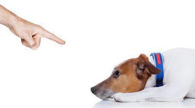Educar a tu perro: ¿Castigo o refuerzo negativo?