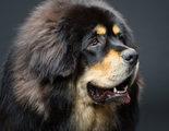 �Cu�l es el perro m�s caro del mundo?