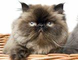 Descubre c�mo es el lenguaje corporal de los gatos