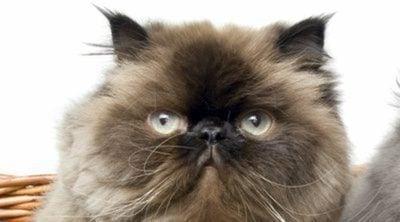 Descubre cómo es el lenguaje corporal de los gatos