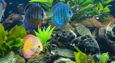 Tipos de filtro para acuario