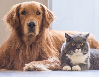 Las cinco enfermedades de piel que más suelen afectar a nuestras mascotas