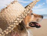 Los perros tambi�n disfrutan de �l, �por qu� les encanta tomar el sol?