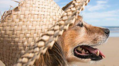 Los perros también disfrutan de él, ¿por qué les encanta tomar el sol?