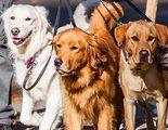 �D�a Mundial del perro!: 10 ideas para celebrarlo