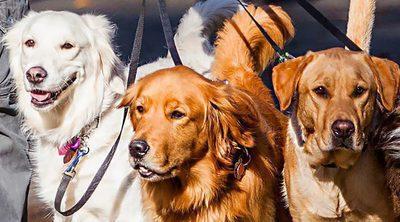 ¡Día Mundial del perro!: 10 ideas para celebrarlo