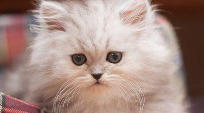 5 consejos para dejar a tu gato solo en vacaciones