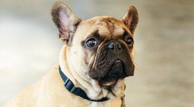 Placa de geolocalización: Qué hacer si tu perro se extravía