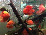 Las 10 enfermedades m�s comunes en los peces de acuario