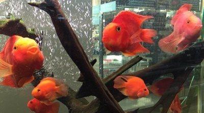 Las 10 enfermedades más comunes en los peces de acuario