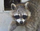 Las mascotas ex�ticas pueden convertirse en especies invasoras