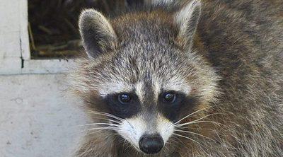 Las mascotas exóticas pueden convertirse en especies invasoras