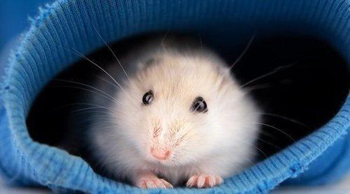 Los 6 roedores más comunes en los hogares