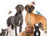 S�ndrome de No�: Acumulaci�n excesiva de animales