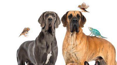 Síndrome de Noé: Acumulación excesiva de animales