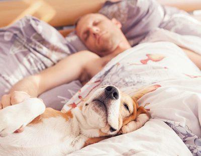 El sueño es clave para la salud de los perros