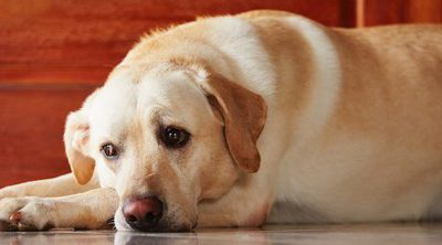 Cómo ayudar a tu perro a superar el luto de otra mascota