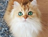 �D�a Internacional del gato! Descubre los felinos m�s influencers