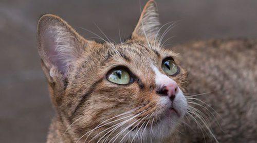Los gatos vuelven a casa por otra cosa distinta a la comida