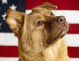 Los perros de los presidentes de Estados Unidos