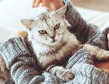 Gato diab�tico: C�mo tratar la diabetes en este felino