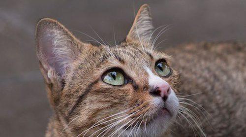 5 cosas que jamás tienes que hacerle a tu gato