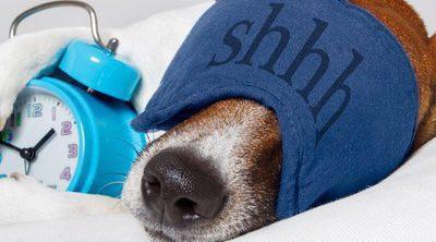 Los perros saben la hora que es por su olfato