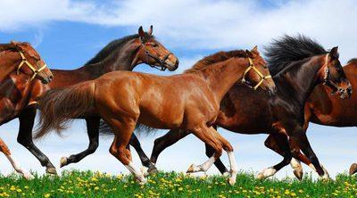 Los equinos más famosos del mundo