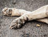 �D�nde entierro a mi perro?
