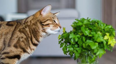 Plantas tóxicas para mascotas