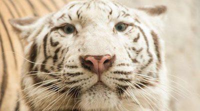 Los animales albinos más sorprendentes