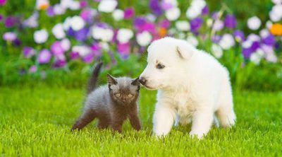Cómo quitar el mal olor a tu mascota sin usar agua