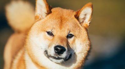 Clasificación de razas de perro por continentes: Asia