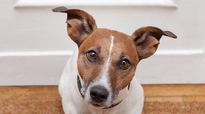 La razón por la que los perros se vuelven locos con el timbre de la puerta