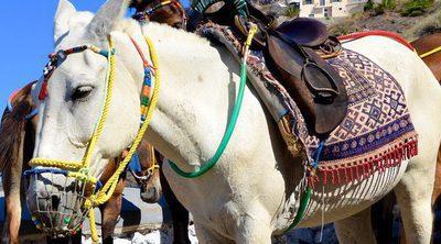 Animales como atracción turística: los burros de Santorini