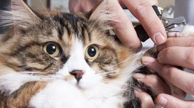 Cómo cortar las uñas a un gato