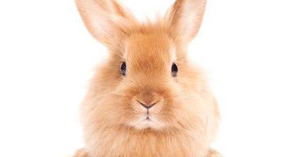 Cómo saber si tu conejo te quiere