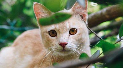 Cómo bajar a un gato de un árbol