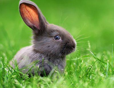 Todo lo que necesitas saber sobre los conejos: Comida, limpieza y cuidados