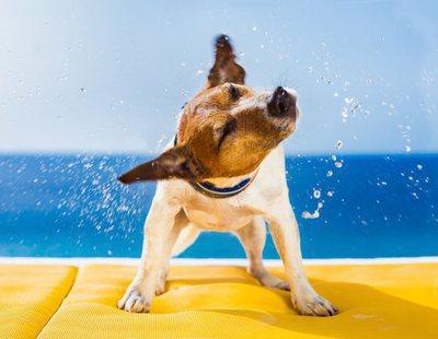 5 razones para castrar a tu perro
