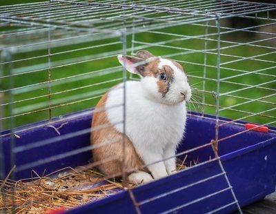 Cómo limpiar correctamente la jaula de tu conejo
