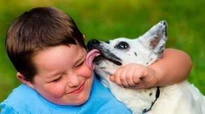 Por qué no tienes que dejar que tu perro te lama la cara