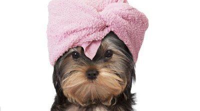 Cómo hacer un acondicionador casero para perros